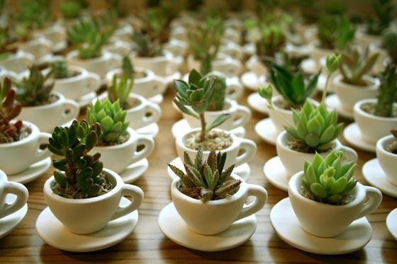 succulent-party-favor